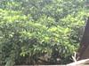20052009347 (prince812000) Tags: dharwar