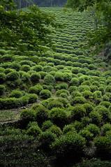 杭州_001 (jacquechong) Tags: china waterfall hangzhou teaplantation