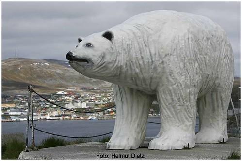 Hammerfest-Bär