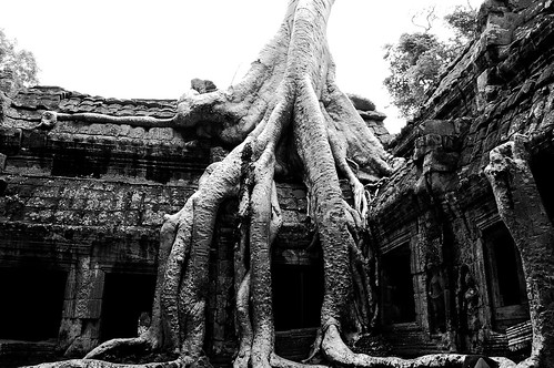 Ta Prohm Roots (view on black) by mendhak, on Flickr
