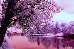 InfraRed 1st attempt (Vincenzo Giordano) Tags: pink blue trees red italy tree leaves foglie alberi torino ir nikon italia purple piemonte filter cielo infrared nm turin piedmont 720 blueribbonwinner d40 infrarosso 720nm vincenzogiordano
