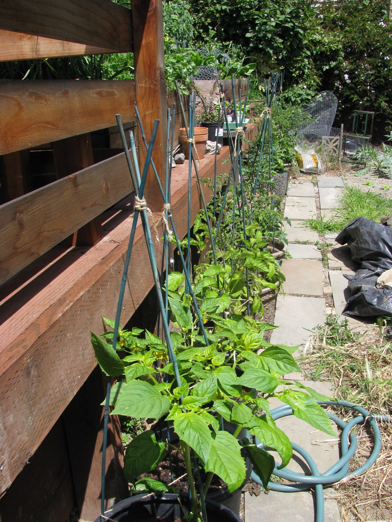 tomatillo & tomato alley