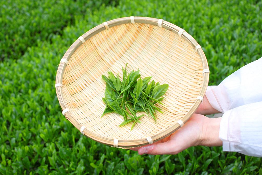 Inokura tea garden (11)