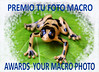 GRUPO MACRO AWARDS