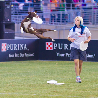 Purina Incredible Dog Challenge