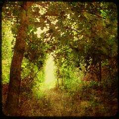 Secret pass (Rose Mist) Tags: trees texture nature photoshop canon square ut pass layers bsquare g9 atthecottage fakettv memoriesbook rosemist ricelakeoncanada