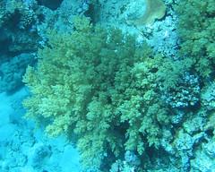 138_3844 (LarsVerket) Tags: egypt snorkling fisk undervannsfoto