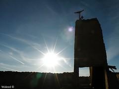 Minaret (Waleed Aldakhil) Tags: minaret mosque waleed مسجد ديره بيوت وليد طين الزرقا بئر بير الديره الزرقاء الساقي الدخيل ثرمداء aldokhail tharmada