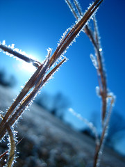 Chariot of Fire (♪ Brigitte...Meh ♫) Tags: morning blue winter sun color macro ice colors field grass sex closeup amazing intense weeds weed colorful flickr pretty frost crystals fierce awesome creative ground pins brutal classique smex pokeys canonpowershotsd1100is
