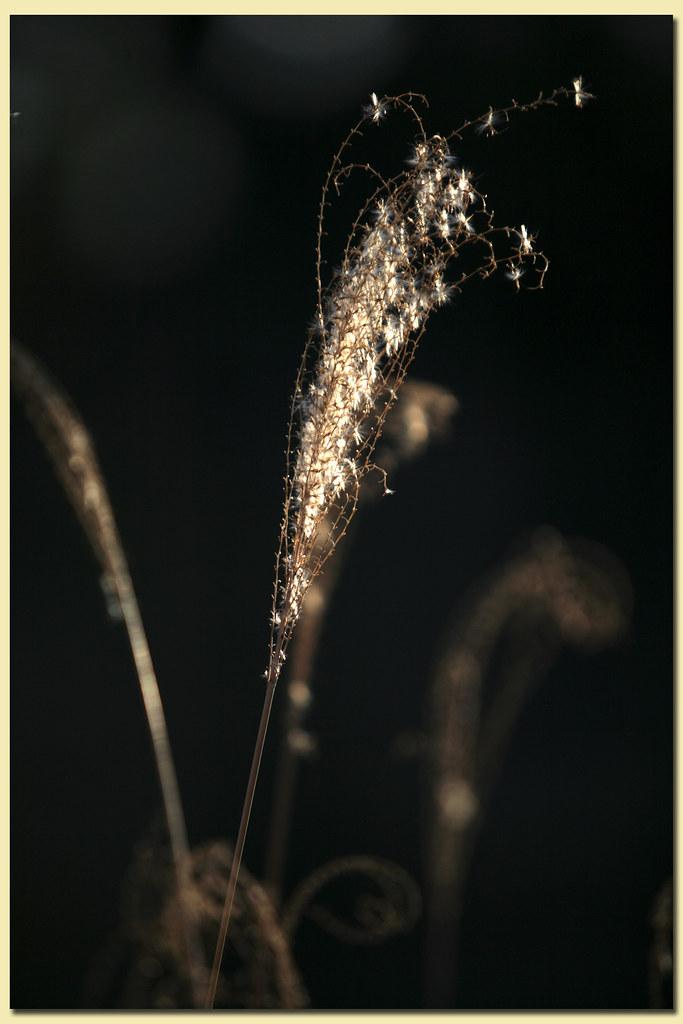 dead grass #1