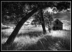 Tree - House (Ernie Fischhofer (off & on w/ hockey season!)) Tags: trees shadow house canada home grass blackwhite alberta wabisabi prairie thehouse rundown thewest erniefischhofer