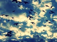 sen kuşları sevdin;P ('sema) Tags: kale kayseri bugün güvercinlik gezmesi