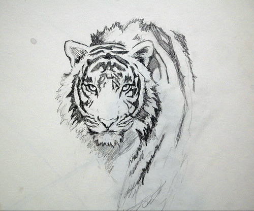 Another tiger sketch by me