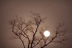 The Moon in Sepia