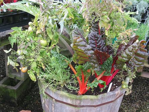 veggie & herb wine barrel