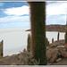 BOLIVIE le salar d'Uyuni  cactus...