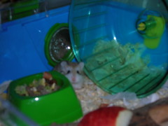 maggot (Blonde_Geek) Tags: hamsters