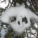 Snow Skull Will Eat Your Babby