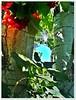 ..bir umut.. (Ebru-li) Tags: bizim ağacı özledim bağ güneşi yeşili