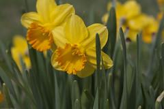 Allerton_Park-45 (chaunceydavis818) Tags: canon eos spring ben il universityofillinois shad uofi allertonpark centralillinois 40d sundayshoot