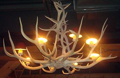 3416984714 c40a2c9452 m An Antler Chandelier   Unique Lighting Choice