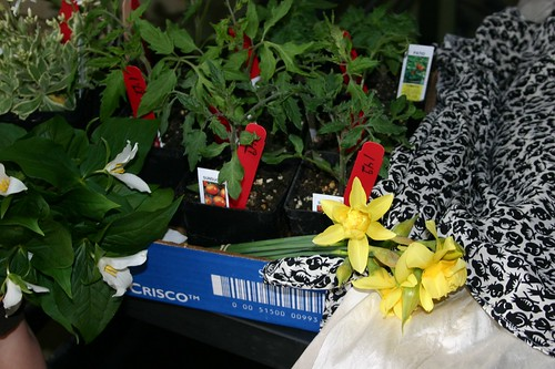 Rock Cress, Trilliums, Tomato Starts, Daffodils, Silk Dress