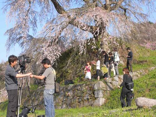 09-04-10【桜】@又兵衛桜-06