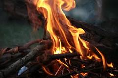 fire (Bronte  Wilson) Tags: flowers trees mist colour green nature water grass australia bark cedar gorge freshwater kangaroovalley shoalhaven