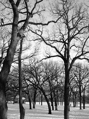 minnehaha trees (brief freunde) Tags: trees winter snow cold pretty netting minnehaha blackandwhitetrees thinforest