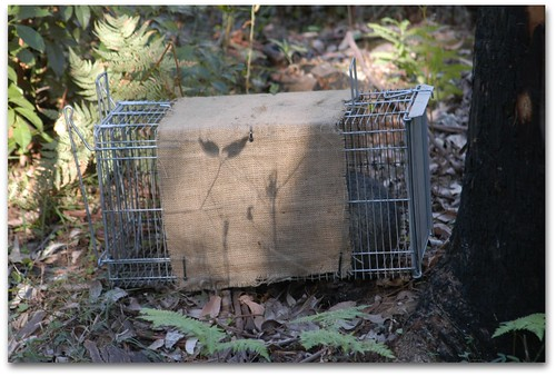 Animal Trap with possum - dougbeckers.com