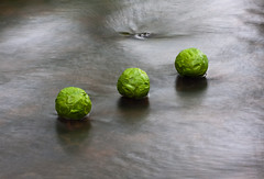 Hazel Spheres on Water (escher is still alive) Tags: sculpture water ball square three spring stream may fresh lancashire growth sphere hazel lancaster 2009 ephemeral landart naturalart enviro sculpure enviroart andygoldsworthyhomage richardshilling burrowbeck