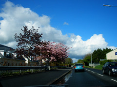 Sunday drive to West County Wicklow (St.Stello) Tags: ireland pinky cowicklow