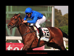 Dettori and Mastery GB won the Italian Derby Better (domenicosavi photographer) Tags: new city newyorkcity trip travel family flowers friends party summer vacation portrait england italy horse music food newyork man rome flower roma art fall film sports nature water fashion sport festival night nikon women friend europe italia foto photographer tour florida portait sportsillustrated fina fir ciclismo 2009 nations d3 giro lazio centenario dettori fantino savi rieti galope ippica galoppo ippodromocapannelle lanfrancodettori domenicosavi derbyitalianobeter masterygb hippogroup rugbr