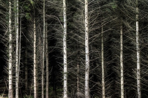 Trees of Wicklow