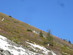 TNAB on the ridge
