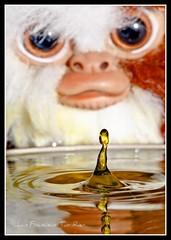 Guizmo guta agua marilla mmmm