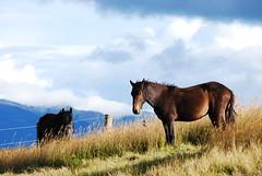 Caballo (Vacacion) Tags: horse caballo colombia elena sopo amazingrace cundinamarca vacacion myeverydaylife miguelvaca elenamutterpalau temaelena