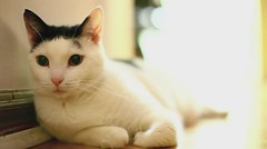 Olive in HD (Barry J. Schwartz) Tags: cat canon video bokeh f14 14 2414 24l 5dmkii 5dmk2 barryjschwartzcom