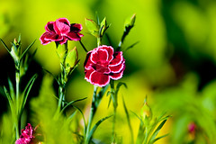My garden-0066 (Thomas Tolkien) Tags: flowers school copyright art sports tom digital garden photography photo education nikon thomas yorkshire d70s teacher hibiscus website creativecommons teaching tolkien northyorkshire jrr tuition potplant twitter robertbringhurst bringhurst thomastolkien tomtolkien mygardenschool httpwwwtomtolkiencom httpthomastolkienwordpresscom tolkienart notrelatedtojrrtolkien tolkienteacher tolkienteaching