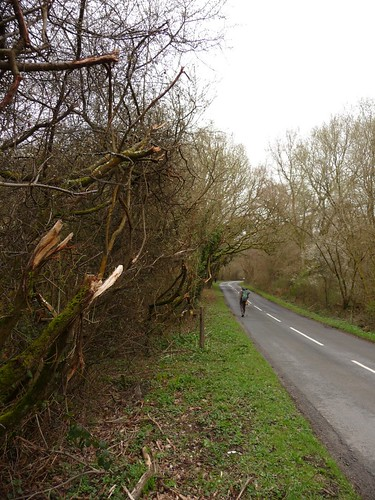 small-destroyed-hedge-pre-lodsworth