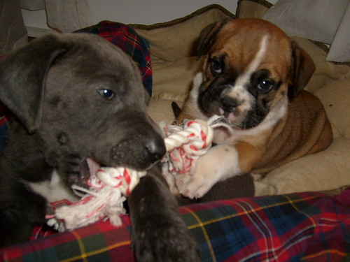 tug of war!
