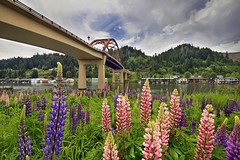 Lupine Flowers Blooming Under the Sauvie Island Bridge - HDR (David Gn Photography) Tags: trees mountain cars nature grass oregon marina portland landscape spring highway automobile transportation pdx wildflowers willametteriver hdr houseboats sauvieisland lupinus lupineflowers sauvieislandbridge canoneos7d sigma1020mmf35exdchsm