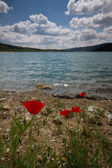 The red flowers and the blue sky (Romain Cassagne) Tags: sky cloud lake france water clouds fleurs eau 04 lac bluesky paca ciel nuage nuages vagues sud berges filtre alpesdehauteprovence sigma1020mm cokin coquelicots shorlines cokinfilters canon7d