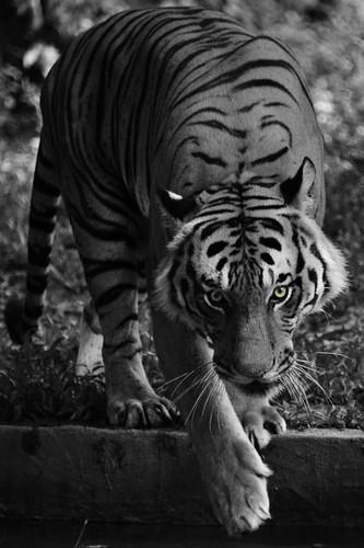 Kuala Lumpur 2011 - Zoo Negara (16)