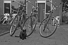 bike yard yesterday (Godesinge) Tags: bicycle oma fiets ©godesinge omafietsen henkgeuzinge