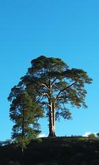rbol de Casandra (Ivn Crdenes Muoz) Tags: sky espaa tree grancanaria dead spain europa europe flickr cielo rbol canaryislands presa casandra leyenda laspalmasdegrancanaria dmcfz8 ivncrdenes