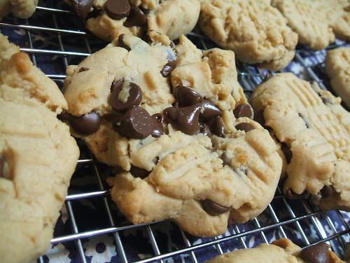 peanut butter cactus cookies