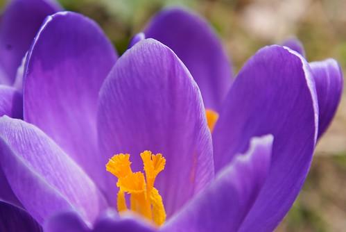 Flor en Tachikawa