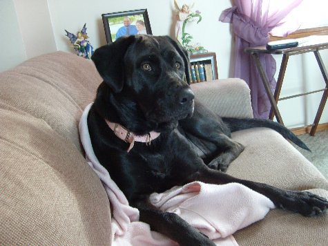 Happy Tails: Gracie, pretty in pink