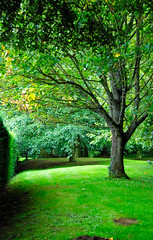 Into the Green at Hidcote Manor Garden (antonychammond) Tags: uk england tree green britain lawn gloucestershire hedge blueribbonwinner hidcotemanorgarden saveearth flickraward firsttheearth overtheexcellence concordians theperfectphotographer simplysuperb goldstaraward winnr pathscaminhos lesamisdupetitprince flickrsmasterpieces
